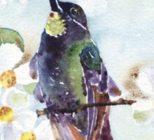 Watercolor | Hummingbird and Apple Blossom Sticker