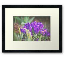 Spring Greetings Framed Print
