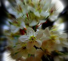 Spring Zoom by Lisa Taylor