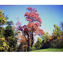 A Tree Grows Near Clermont Photographic Print
