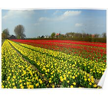 Tulip Fields in Holland! Poster