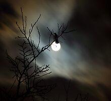 Raven by Mikhail Palinchak