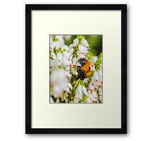 Tree Bumble Bee Framed Print