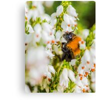 Tree Bumble Bee Canvas Print
