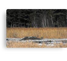 Beaver Dam in Winter Canvas Print