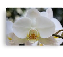 White Orchid2 Canvas Print