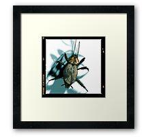 cockroach Framed Print
