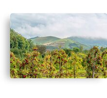 Apple harvest below Bad Berg, Kaiserstuhl, Germany Canvas Print