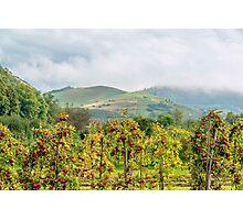 Apple harvest below Bad Berg, Kaiserstuhl, Germany Photographic Print
