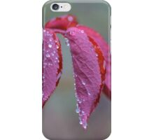 Raindrops On Rose Leaves iPhone Case/Skin