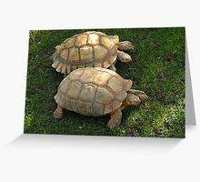 Turtle Race Greeting Card