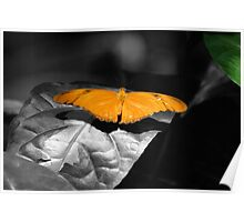 Butterfly - selective color Poster