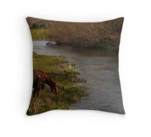 Horse to Water Throw Pillow