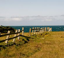 Fence Line by Cheryl  Lunde