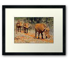 Warthog family Framed Print