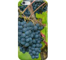 Vineyard, Kaiserstuhl, South-West Germany iPhone Case/Skin