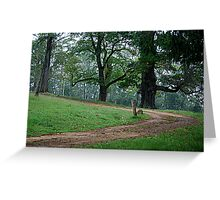 The Road to Intrigue - Wynne Property Mt Wilson NSW Greeting Card