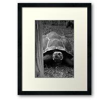 Peek-a-boo! Framed Print