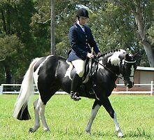 Ridden Pinto Stallion Class by louisegreen