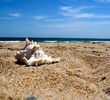 Seashell Splendor 2 by Lynnrmorris