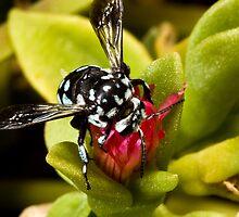 Neon Cuckoo Bee by Colin  Ewington
