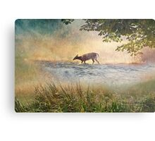 White Tail Deer Touting the Water - Parc National Mont Tremblant Metal Print