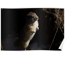 Gary the ground squirrel. Poster