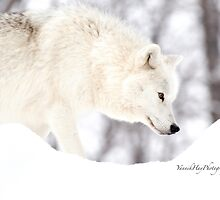 On The Prowl - Arctic Wolf by Yannik Hay