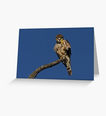 Hey, whazzup? - Merlin Greeting Card