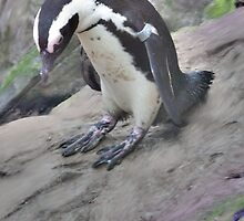 Penguin Sliding On A Rock by rumisw