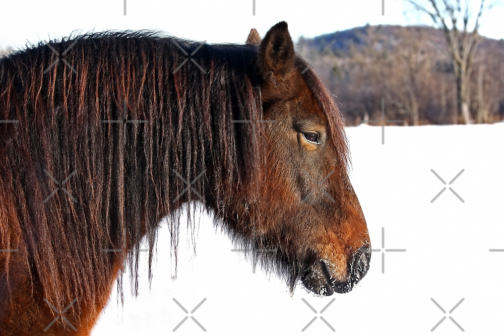 Morning light - Horse by Jim Cumming