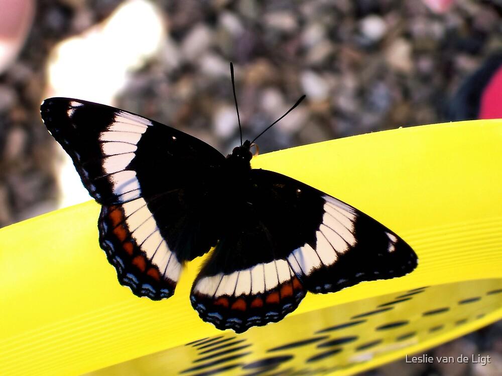 White Admiral Butterfly by Leslie van de Ligt