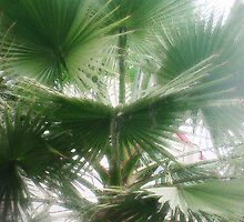 California Palms by cetstreasures