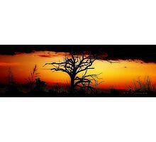 Tangled Outback Sunset © Vicki Ferrari Photographic Print