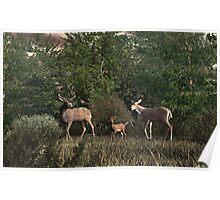 Family of Deer Poster