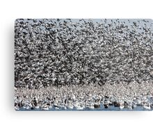 It's Snowing Geese  Metal Print