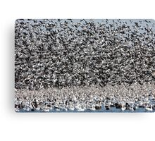 It's Snowing Geese  Canvas Print