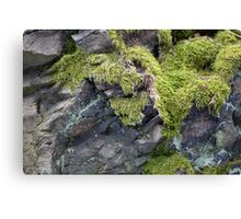 Moss on the rock Canvas Print