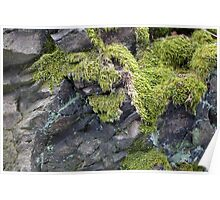 Moss on the rock Poster