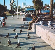 Birds in a row by magins