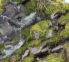 Moss on the rock by Zosimus