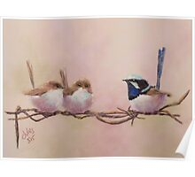 Superb Fairy Wrens - On the Wire Poster