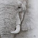 Elephant by JulieWickham
