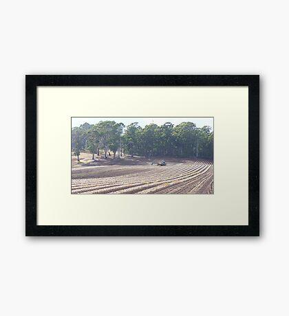 farmland and animals Framed Print
