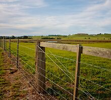 Fence by Benjamin Smith