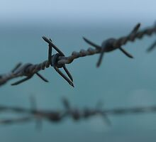 Barbed wire at Petrol cove Victor Harbor by Liam Moore