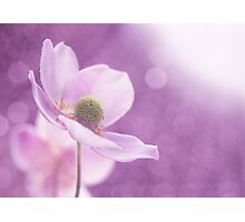 Violet Breeze Photographic Print