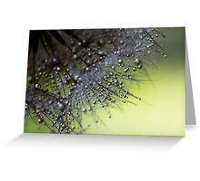 Fuzzy Drops of Awesomeness Greeting Card