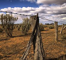 Saltbush Country by JimFilmer