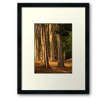 Forest near Siem Reap, Cambodia Framed Print